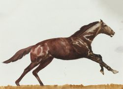 Horse -race