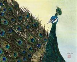 Portray of Peacock