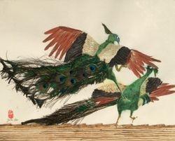 fighting Peacocks (1)