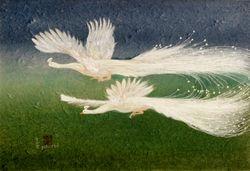 Flight White Peacocks