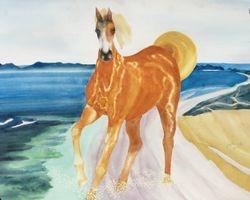 Horse in PV Beach