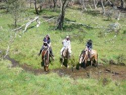 Kirramurray Horses taking a drink