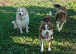 Dusky, Kirra and Wish