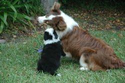 Marli 09 pup and Kirra