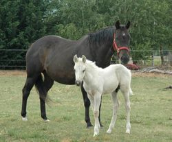 Annie and Pally Colt