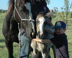 Kirramurray Oaks Jillaroo and Filly