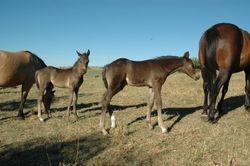 Clancy's 2011 Foals