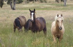 Remmie's Yearlings 2012