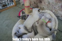 Sofia's baby's born Jan 18th