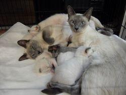 Kittens born 7-17-09