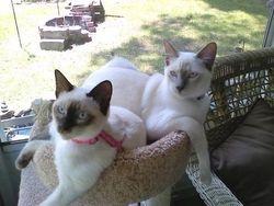 Sinbad & Princess Laying around