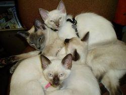 Kittens 1-23-09