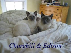 Churchill & Edison