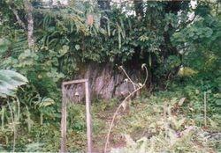 Srijanga mang fukku (Martam, west Sikkhim)