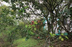 Pomelo at La Casa Verde Panama