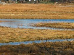 Hummock marsh
