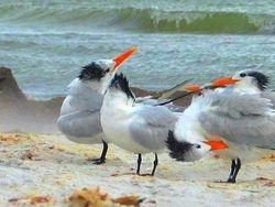 Tern triad