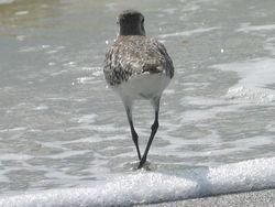 Tern back