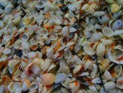 Tidal shells