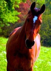 Autum Pony