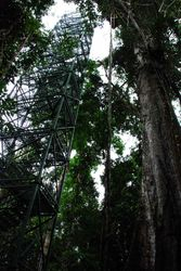 Amazon Jungle - Bird Watching Tower