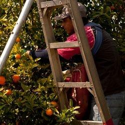 Ladders 6