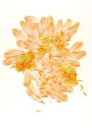 Floral Pedals 2