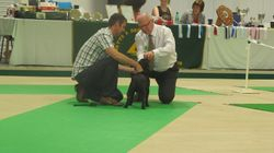 1st MPD Notts & Derby Ch show, Judge Mick Smith