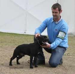 Marstaff Smokin Joe,1st Junior dog at Windsor Champ show, pic by Ed Dolphin