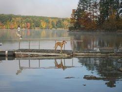 Reflections of Beautiful Dog