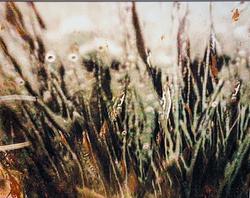 Car Wash Grass