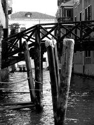 Venice piles