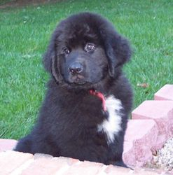 Warrior pup