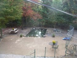 Middle of Newf's Yard from top floor
