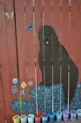 This painting was inspired from a photo of Fats Domino vom Butzensee.  A gorgeous brown Newfoundland.