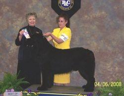 Truman Winners Dog, Best of Winners & Best Bred By