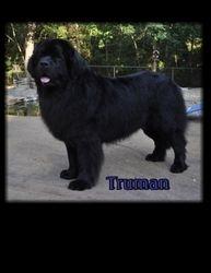 8-21-2010 Truman won Winners Dog under Judge Bill Shelton