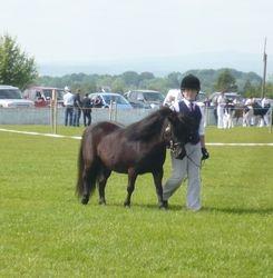 Ballymoney show