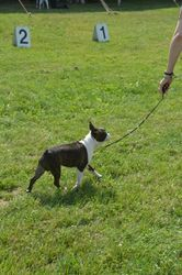 Bryn Mawr Kennel Club--6/15/13