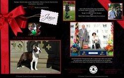 EBoston Terriers--December 2013