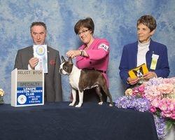 Lenape Boston Terrier Club--4/28/15