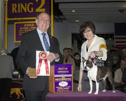 Westminster Kennel Club--2/16/15