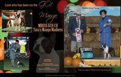 EBoston Terriers--November/December 2012