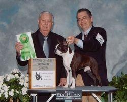 Boston Terrier Club of New York--2/12/12