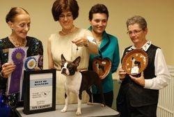 Tri-Angle Boston Terrier Breeders Club--8/6/11