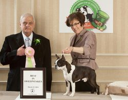 Boston Terrier Club of Connecticut--3/15/14