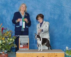 Bronx County Kennel Club--3/23/14
