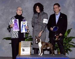Boston Terrier Club of New York-- 2/13/10