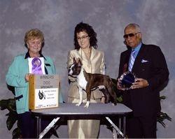 Boston Terrier Club of New York-- 2/14/10