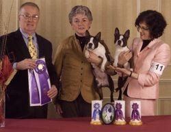Boston Terrier Club of Connecticut--3/21/10
